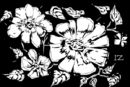 black-white-flowers