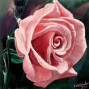 summer-rose