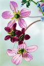 dangling-pink-flowers