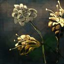 golden-flowers