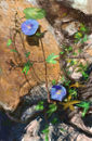 rocks-and-flowers