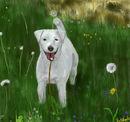 rebeccas-white-dog