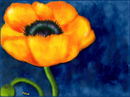 a-yellow-poppy