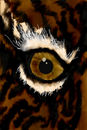 tigers-eye